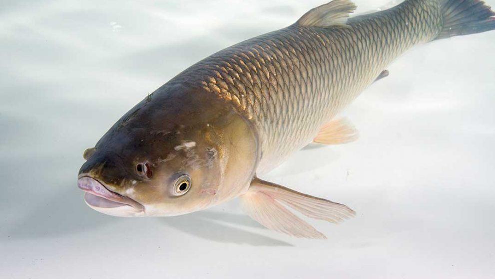 Wat je moet weten over je aas tijdens het vissen